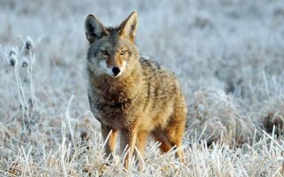 Животный мир северной америки — студенческий портал