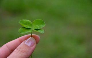 Способы вегетативного размножения растений в сельском хозяйстве — копулировка и окулировка