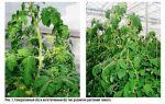 Вегетативные и генеративные органы растений — студенческий портал