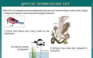 Строение и процессы жизнедеятельности птиц — студенческий портал