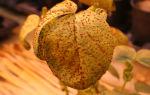 Значение царства грибов: систематика и практическая польза