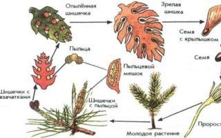 Высшие семенные растения — общие признаки и значение в природе