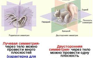 Царство животные — систематика и наиболее известные представители