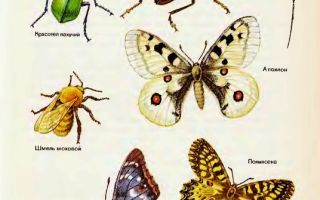 Значение насекомых в природе и жизни человека:
