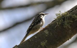 Значение птиц в природе и жизни человека — происхождение и характеристика класса
