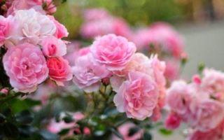 Характерные признаки покрытосеменных — возникновение цветка и размножение