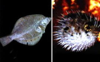 Разнообразие костистых рыб — студенческий портал