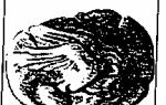 Пелопоннес в viii-vi вв. до н.э. общие условия развития. — студенческий портал
