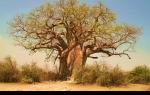 Растительный мир африки — студенческий портал