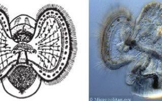 Разнообразие моллюсков — размножение и развитие, общая характеристика