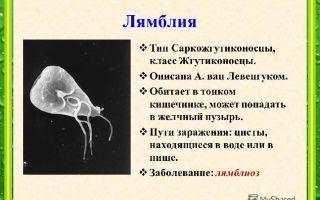 Значение одноклеточных в природе и жизни человека — среда обитания и внешнее строение