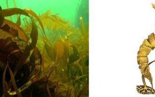 Значение водорослей — студенческий портал