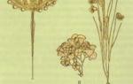 Разнообразие одноклеточных — общая характеристика и внешнее строение