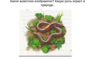 Значение кольчатых червей в природе и жизни человека: биологическое и практическое