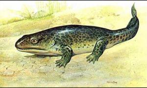Класс пресмыкающиеся, или рептилии: общая характеристика и значение в природе