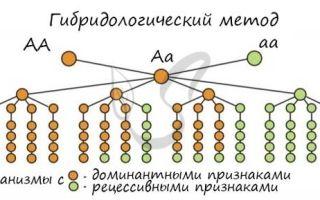 Близнецовый метод — студенческий портал