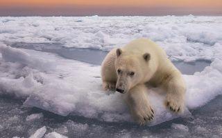 Особенности природы антарктиды — студенческий портал