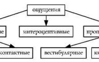 Классификация ощущений — студенческий портал