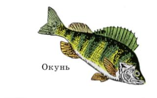 Класс хрящевые рыбы: общая характеристика и морфологические особенности