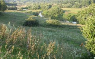Природные зоны — студенческий портал