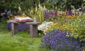 Значение растений — основные отряды и их представители, учет длительности жизни