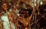 Строение и процессы жизнедеятельности круглых червей — происхождение и характеристика