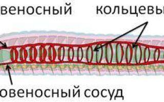 Разнообразие кольчатых червей — студенческий портал
