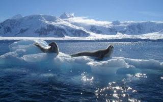 Мировой океан. состав мирового океана — студенческий портал