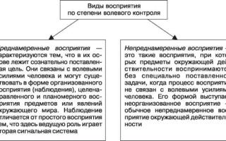 Классификация восприятия — студенческий портал