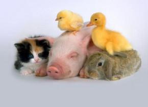 Подцарство многоклеточные животные. Беспозвоночные - Студенческий портал