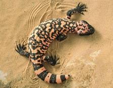 Строение и процессы жизнедеятельности рептилий - Студенческий портал