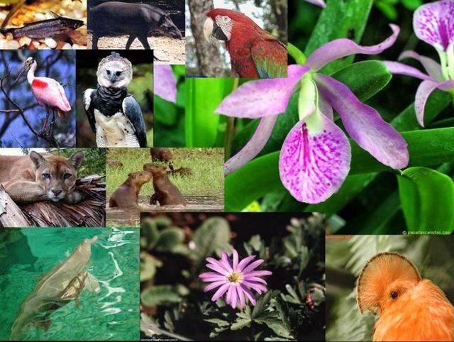 """Смысл понятий """"флора"""" и """"растительность"""" - Студенческий портал"""