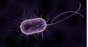 Строение, питание и размножение бактерий - Студенческий портал