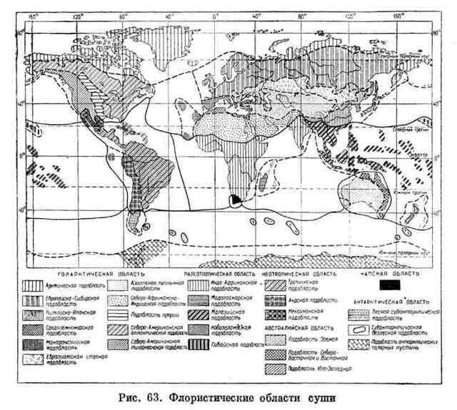 Особенности распространения растений на земном шаре - Студенческий портал