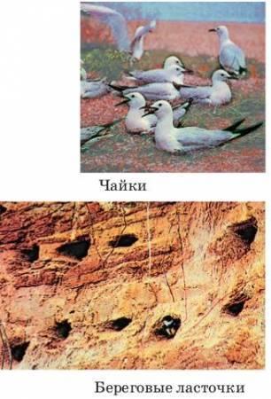 Сезонные явления в жизни птиц - Студенческий портал