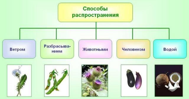 Плод. Образование и строение плодов - Студенческий портал