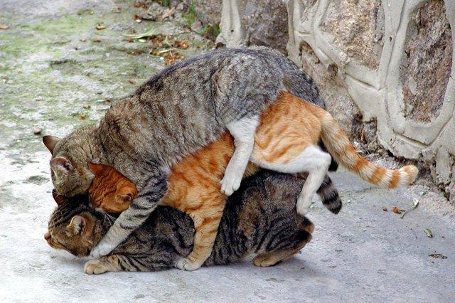 Особенности размножения животных - Студенческий портал