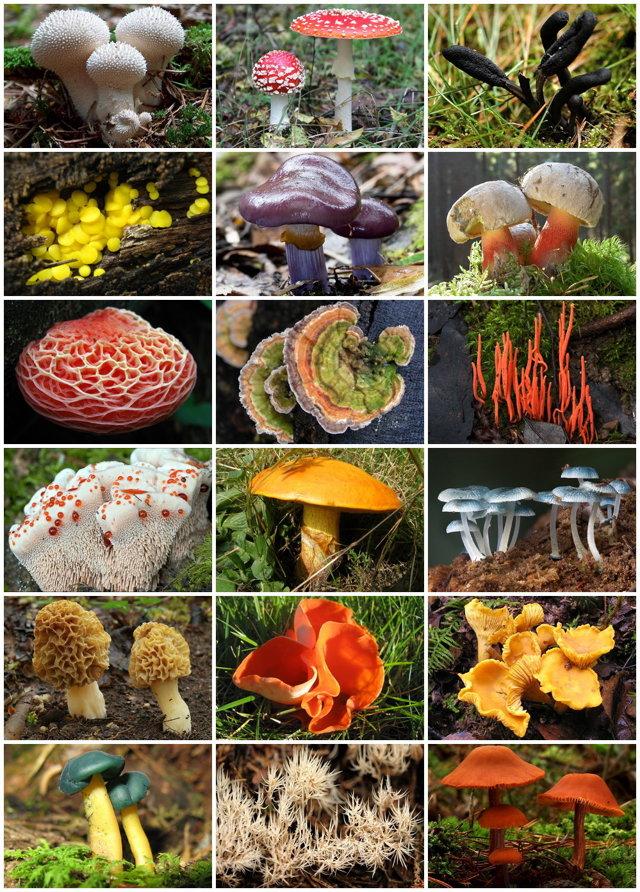 Значение Царства грибов - Студенческий портал