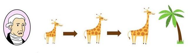 Понятие о систематических единицах в зоологии - Студенческий портал