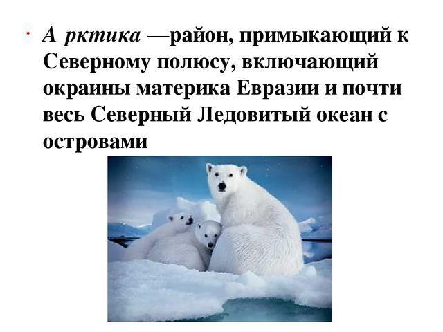 Безлесные природные зоны Арктики и субарктики - Студенческий портал