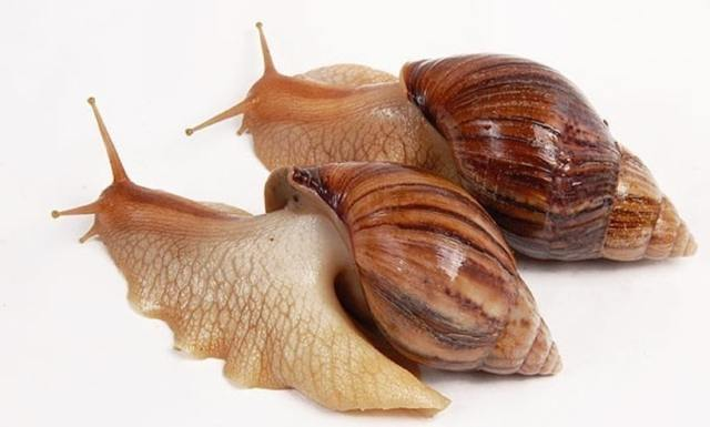 Тип Моллюски. Общая характеристика типа. Значение моллюсков в природе и жизни человека - Студенческий портал