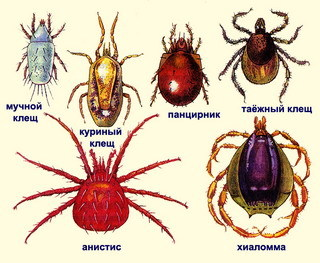 Значение паукообразных в природе и в жизни человека - Студенческий портал