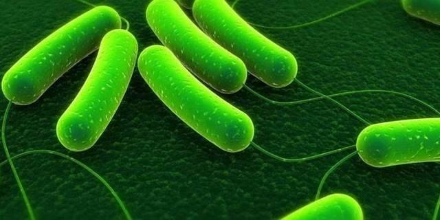 Симбиоз клубеньковых бактерий и бобовых растений - Студенческий портал