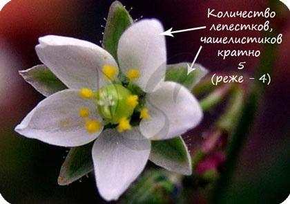 Значение растений - Студенческий портал