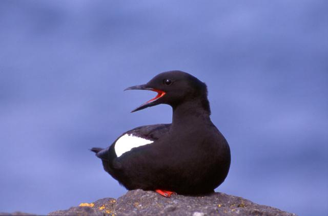 Природа арктических островов - Студенческий портал