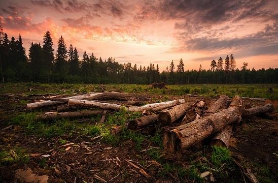 Охрана биосферы - Студенческий портал
