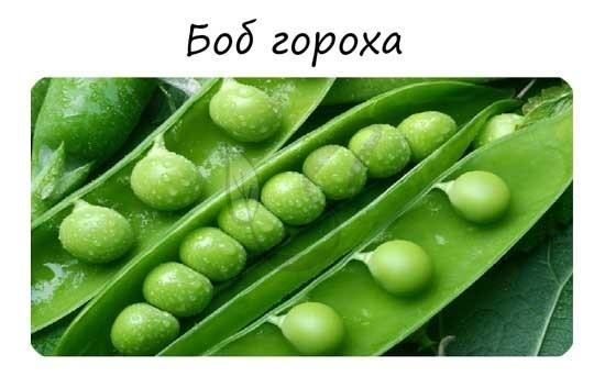 Симбиоз бобовых растений и клубеньковых бактерий - Студенческий портал