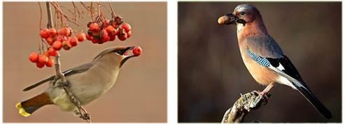 значение птиц в природе и жизни человека - Студенческий портал