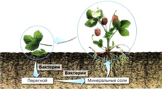Распространение бактерий в природе - Студенческий портал