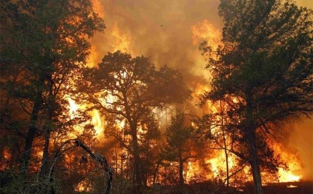 Лесные пожары - Студенческий портал